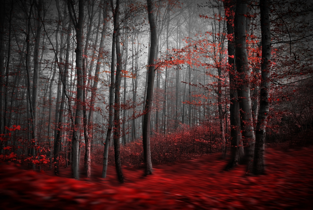Fotokonst Bloody River