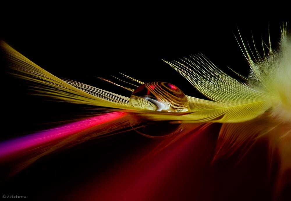 Fotokonst Colors in the drop