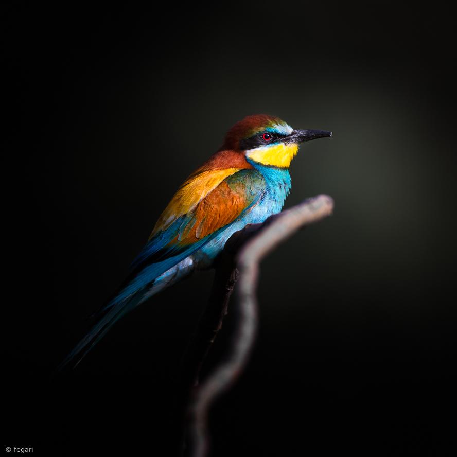 Fotokonst Colorful Darkly