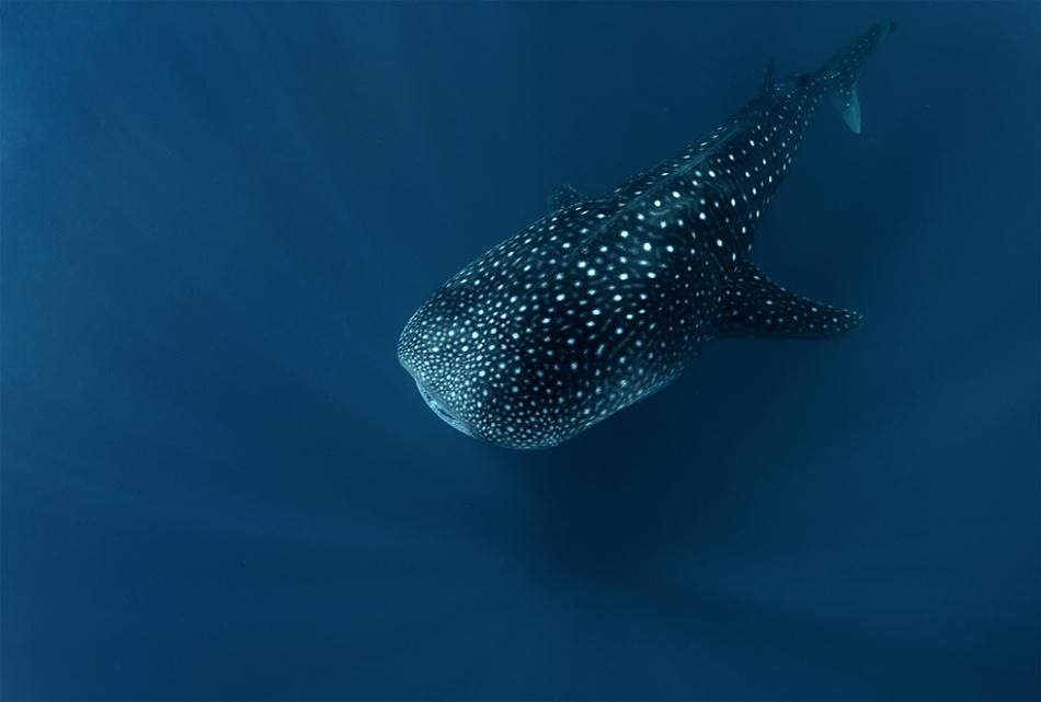 Fotokonst Spirit of deep water