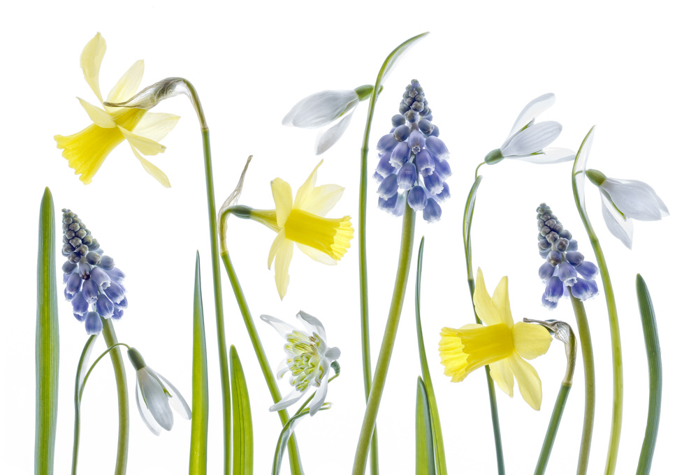 Fotokonst Spring