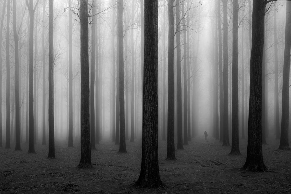 Fotokonst In a Fog