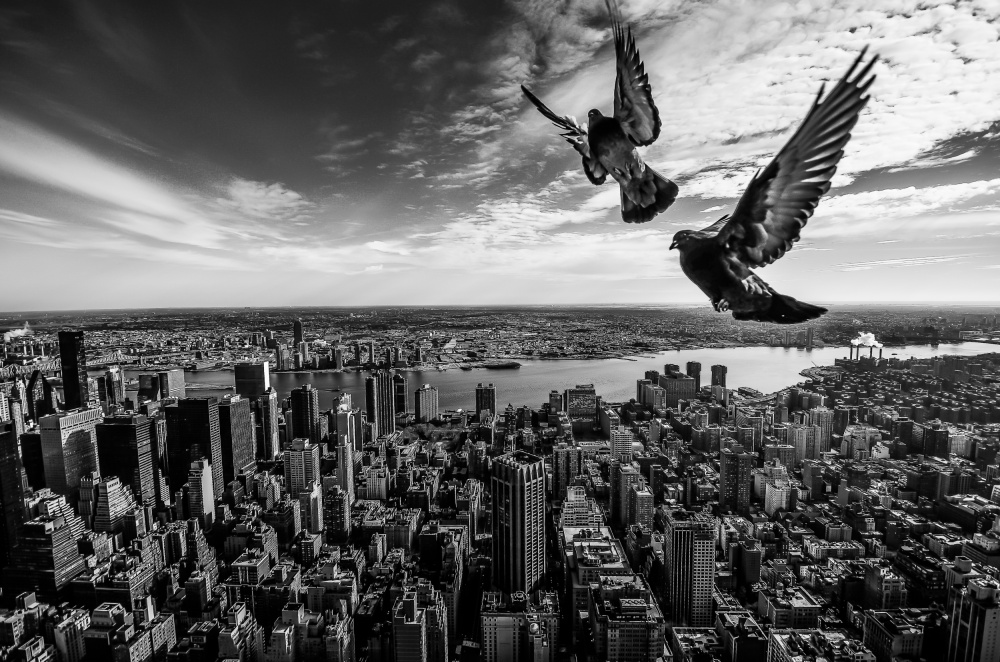 Pigeons On The Empire State Building