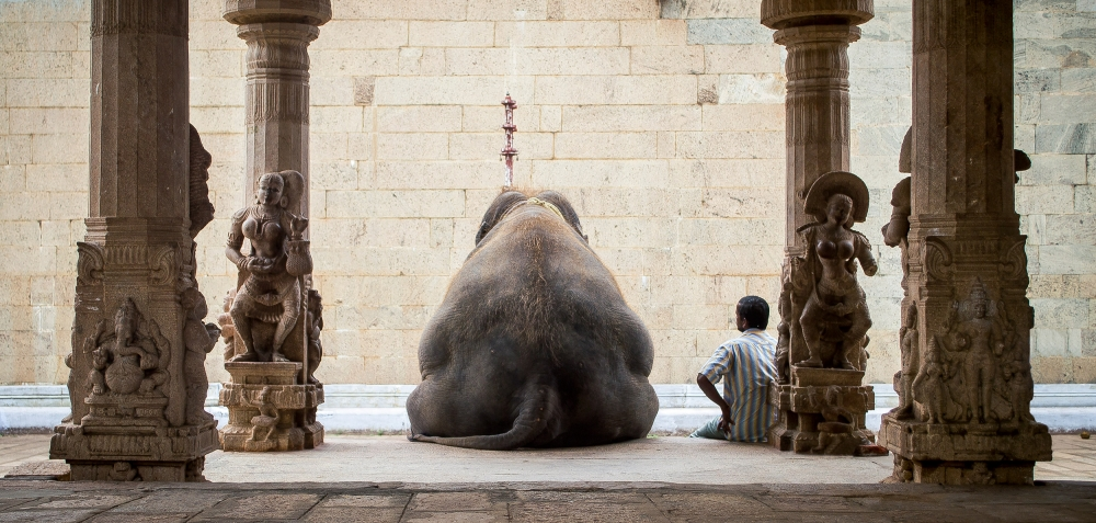 The Elephant &Amp; Its Mahot